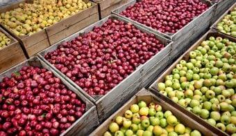 """Intendente de General Roca: """"Inundaron el mercado nacional con peras y manzanas de Chile, España y Portugal"""""""